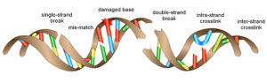 dna-damage