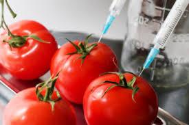 Makanan ubah suai genetik (GMF) – Baik atau tidak?