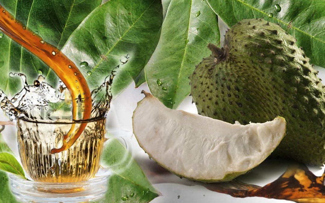 Durian Belanda Merawat Kanser Seribu Kali Lebih Baik Dari Kemoterapi?