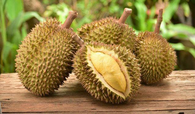 Mengapa Durian Mempunyai Aroma Yang Kuat?
