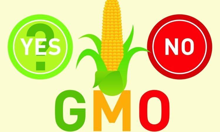 Bahayakah Makan Epal GMO?