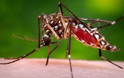 10 Fakta tentang Nyamuk yang Anda perlu tahu…