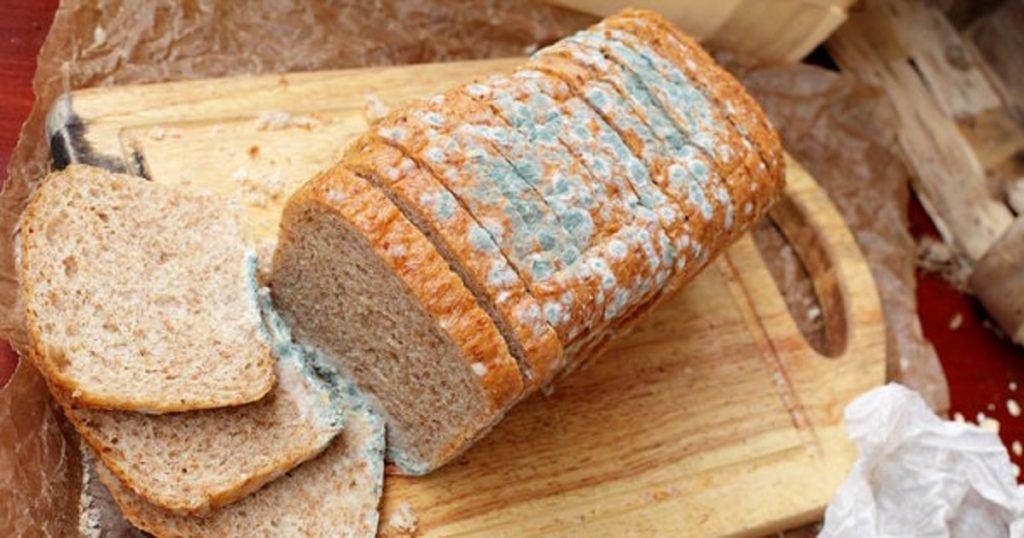 Kulat pada roti