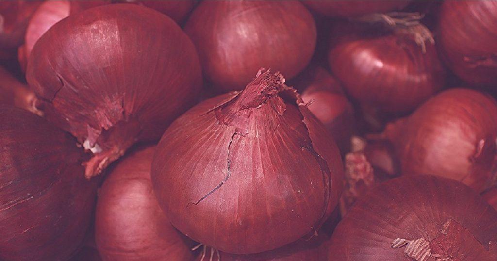 cara tanam bawang merah