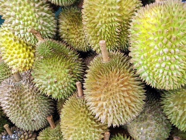 cara tanam durian