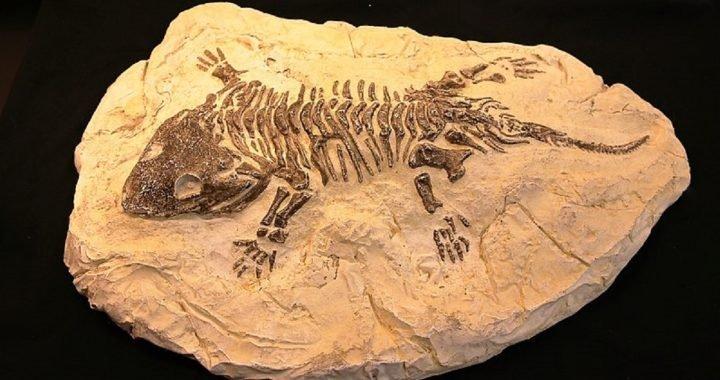 Bagaimana Fosil Boleh Terbentuk