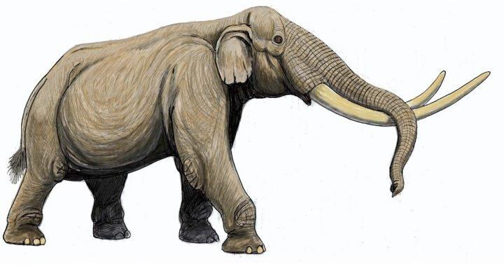 gajah stegodon