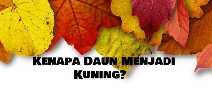 kenapa daun menjadi kuning