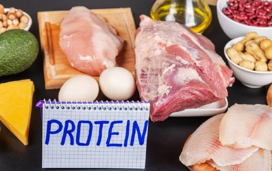 fungsi protein