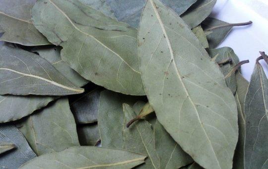 khasiat daun salam